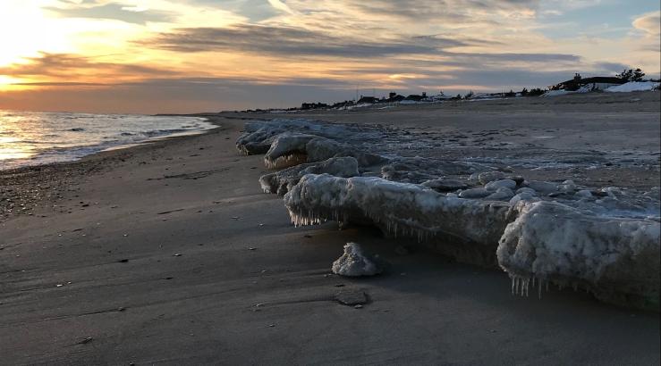 Beach guardians