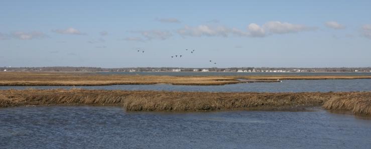 BDs marsh