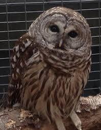 QWR Owl