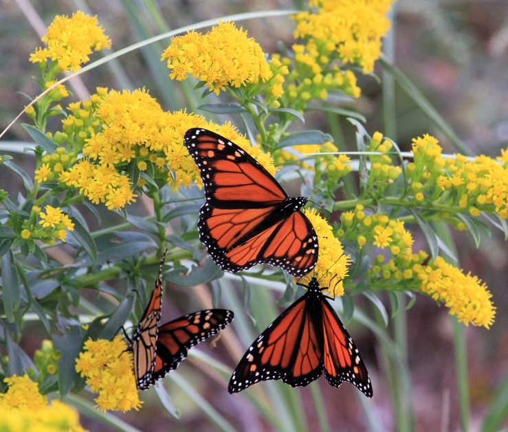 Monarchs of the Glen