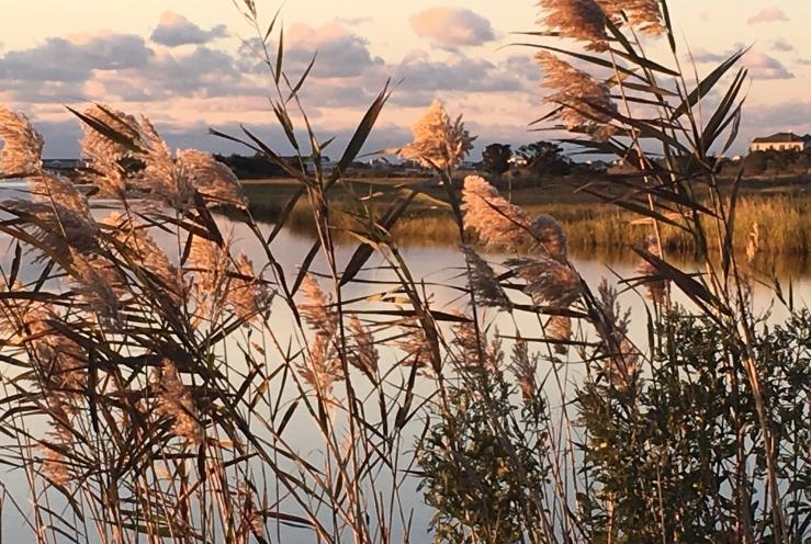reeds RC