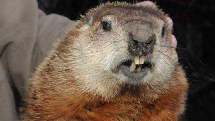 quahog groundhog