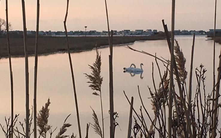 swan creek rc