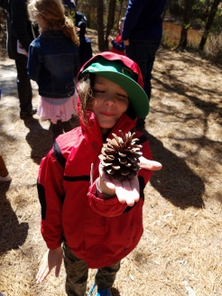QWR winter pinecone