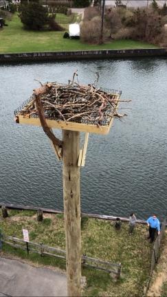 Osprey new sticks