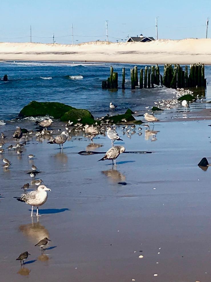 Shorebirds AB