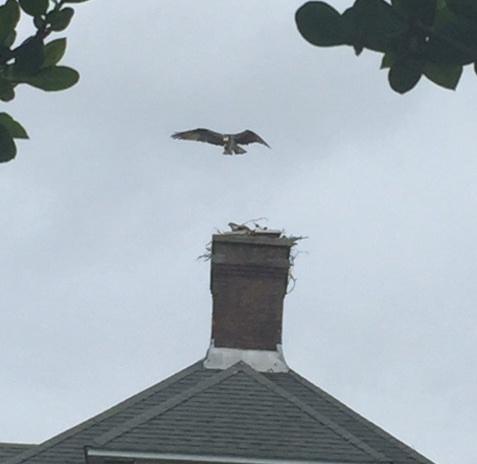 osprey-roof.jpg
