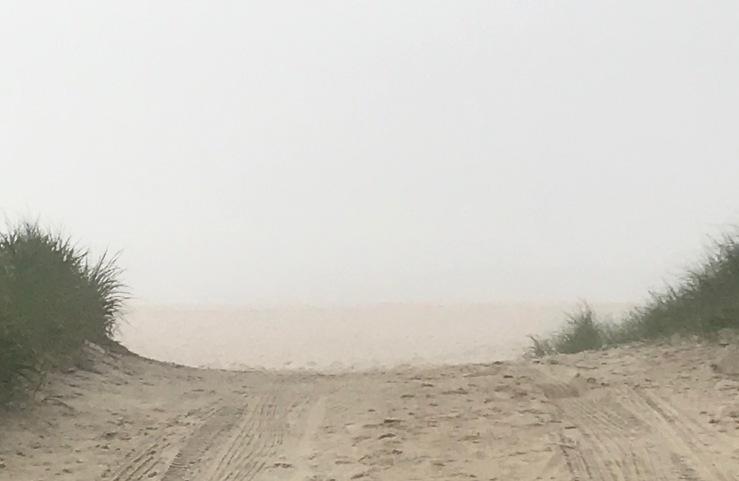 Dolphin beach fog