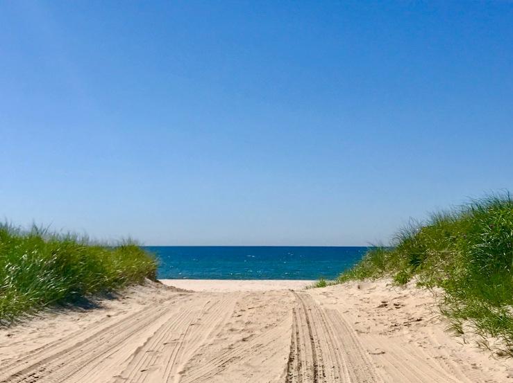 Dolphin Beach June 19