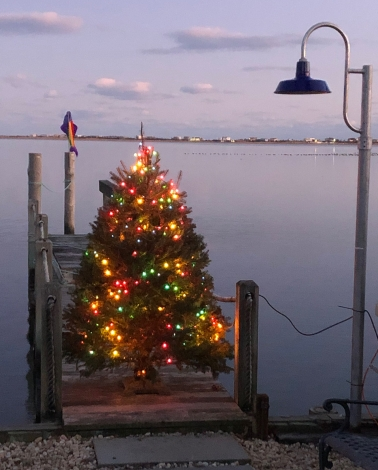 Sartorius dock tree