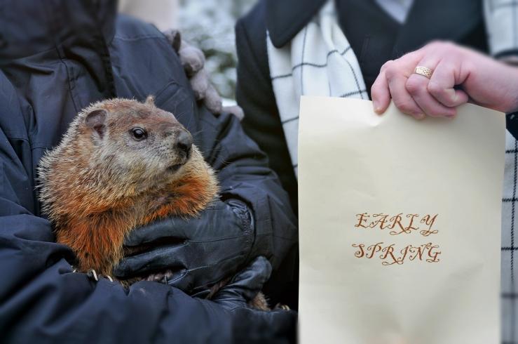 Groundhog Quigley