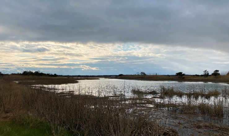 marsh west AB