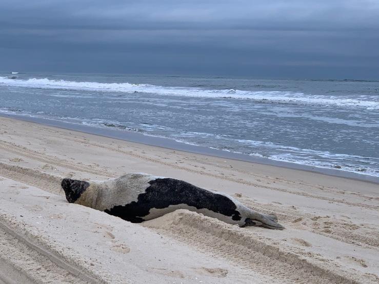 Seal 0330 PP