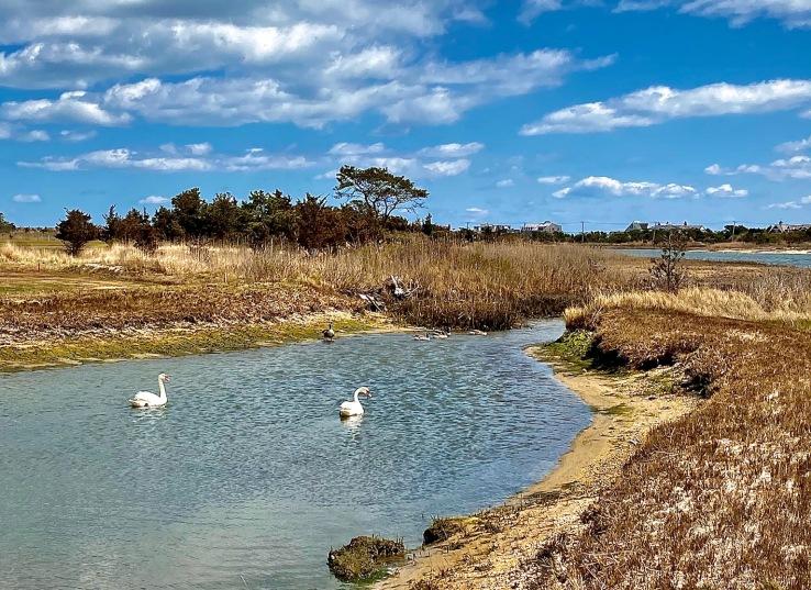 Swan creek AB