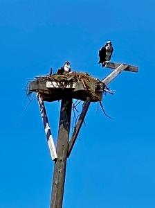 Tiana osprey AB