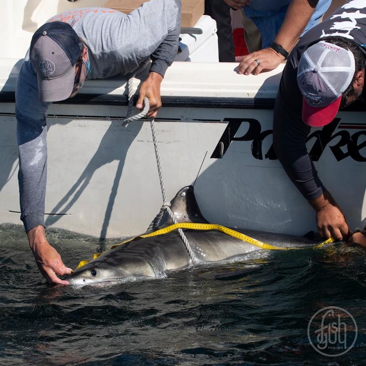 white shark FG