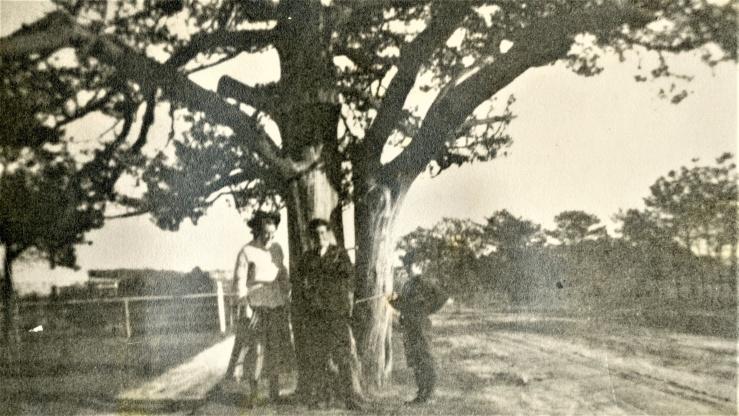 quogue purchase cedar tree