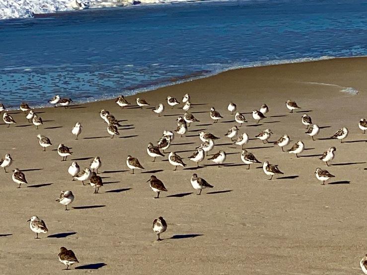 social birds AB