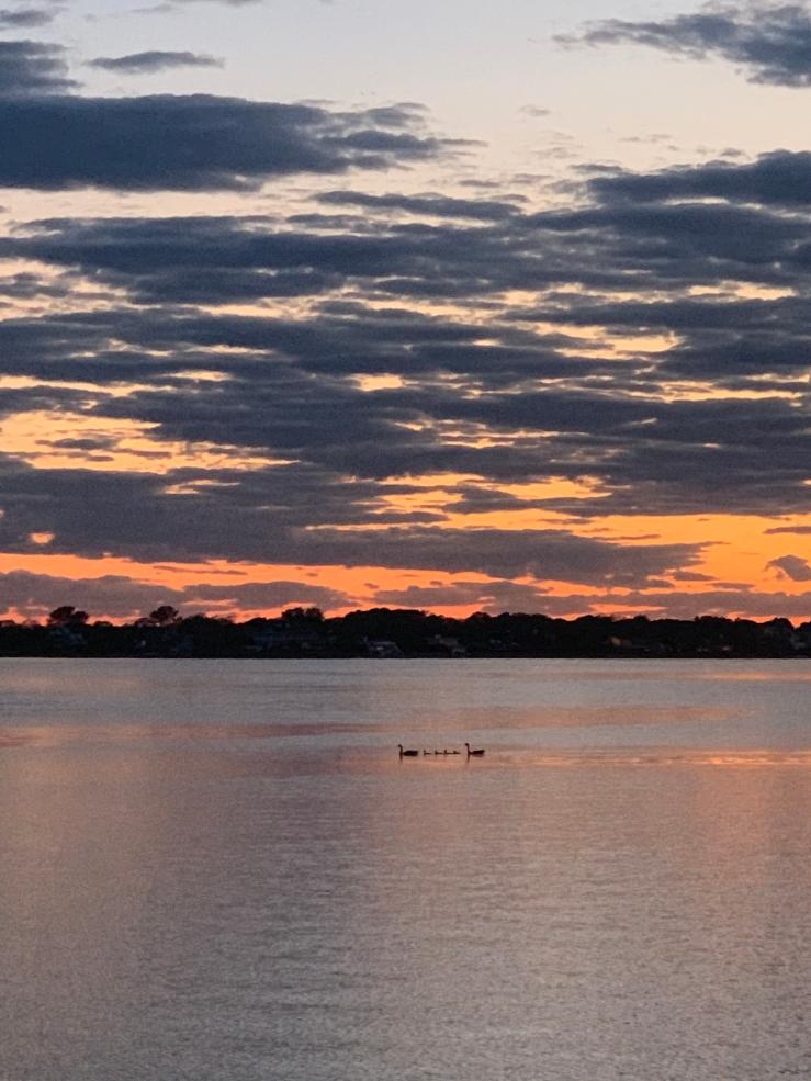 Bay birds sunset 0607 HW