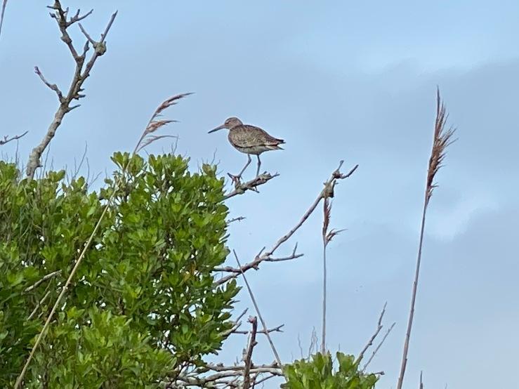 Branch bird AB