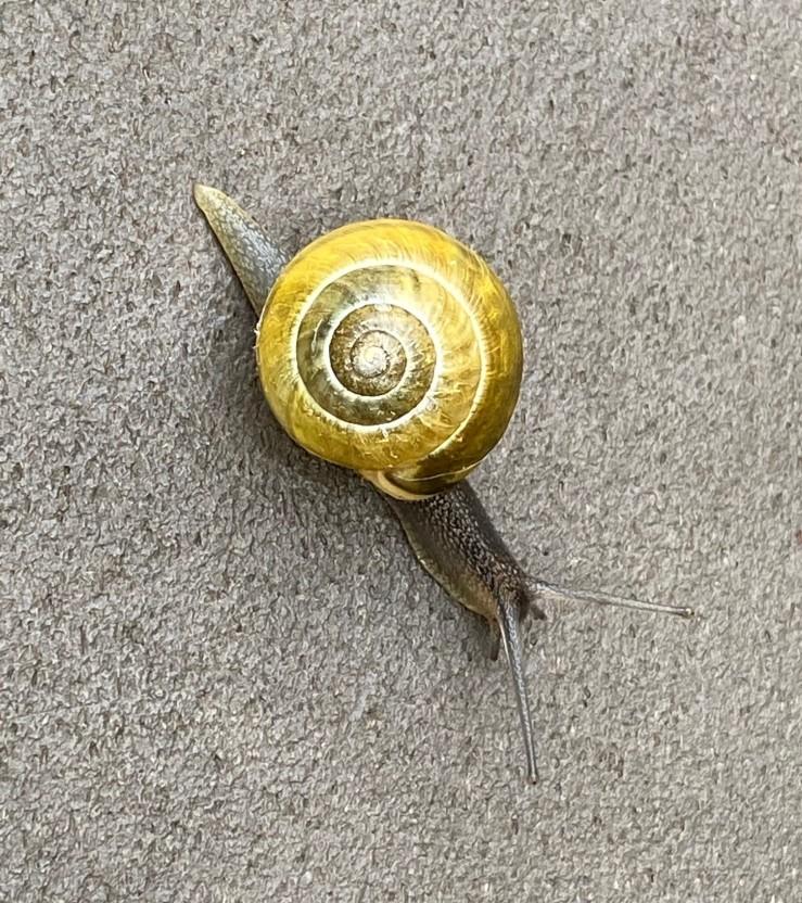 gastropod AB (2)