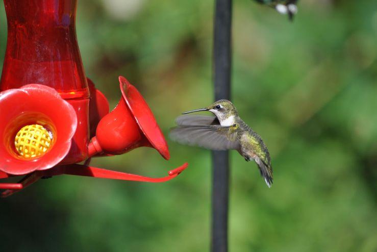 Hummingbird EC