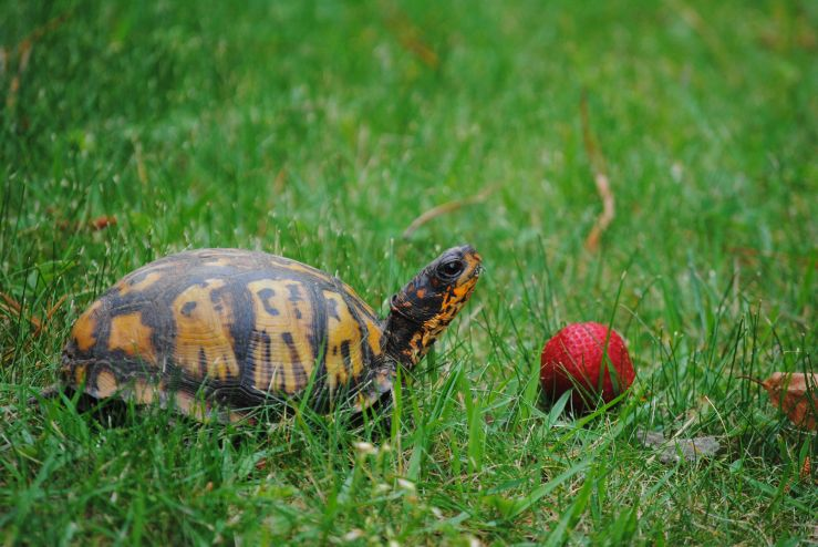 Turtle visitor EC