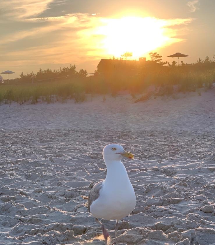 BEach Gull PP