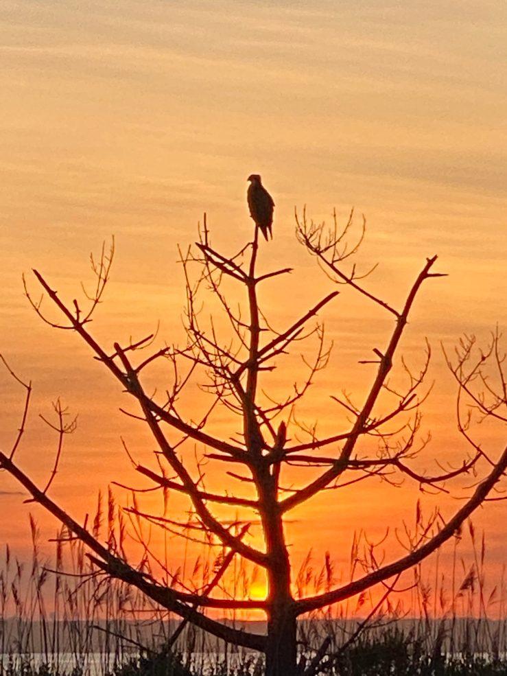 Sunset perch EC