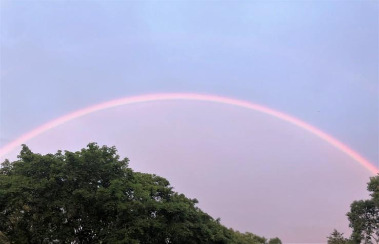 Moley rainbow RM