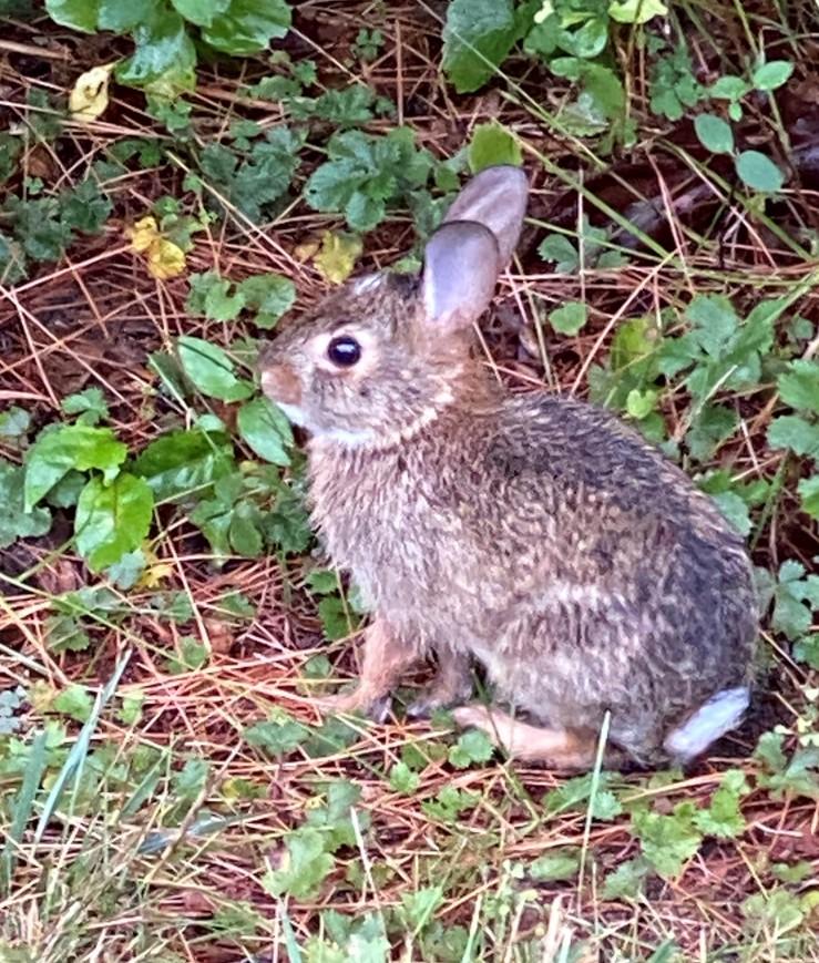 Baby bunny EC (2)